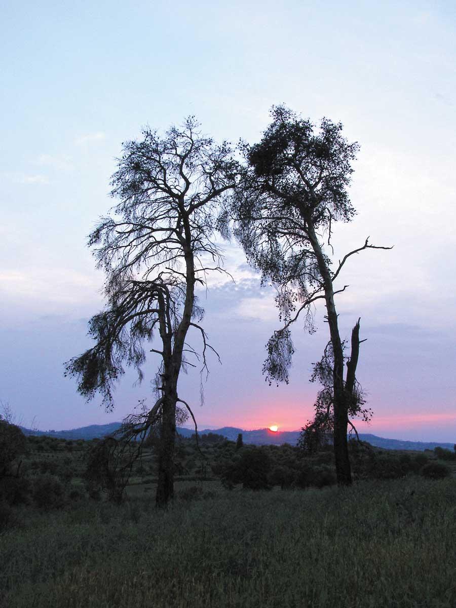 Η µεγάλη πυρκαγιά της Ηλείας - ∆έκα χρόνια µετά